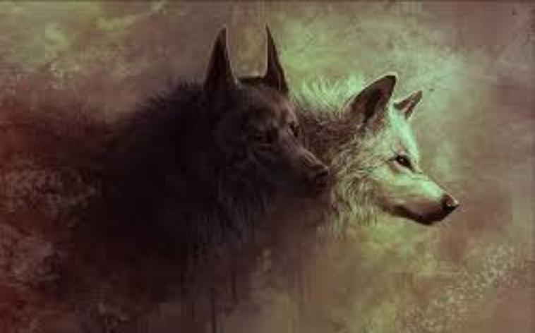 loup et la cicatrice