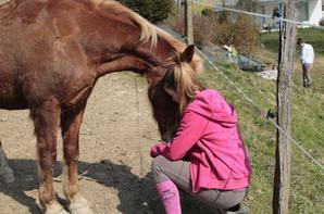 L'air du paradis souffle entre les oreille d'un cheval.