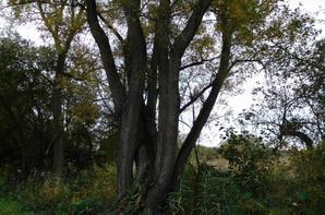 Petite balade d'automne pas loin de la maison