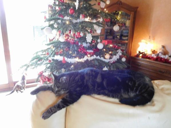 Trés bon Noël a tous mes amis , bon appétit et reposez vous bien ! a bientot