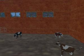 et achat d animaux (cochon,mouton,veaux et vache)