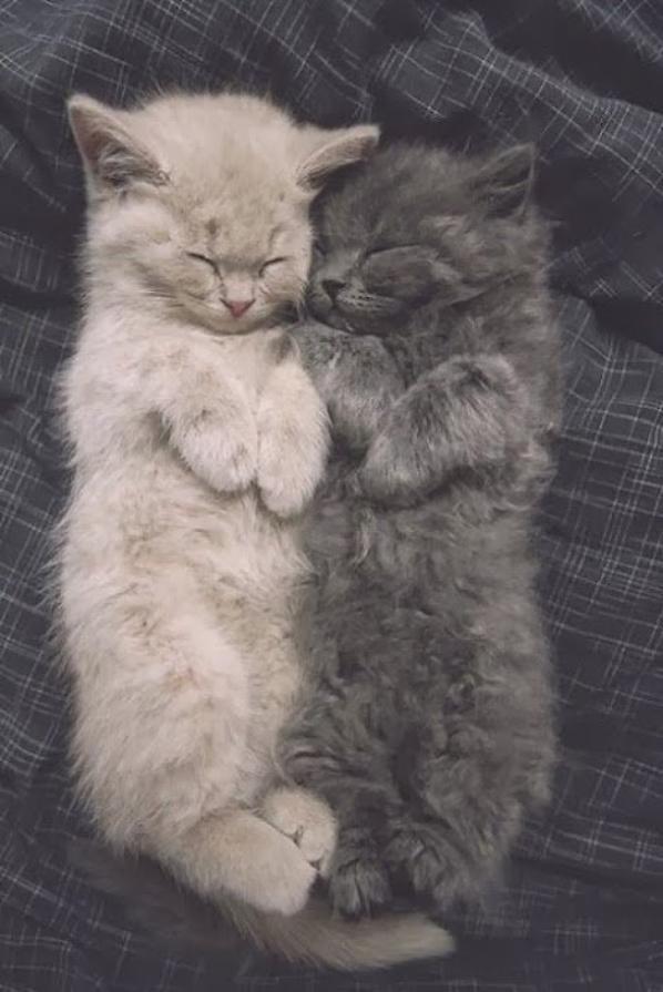 ♥Samy en deuxième position♥ Le chat un animal magnifique