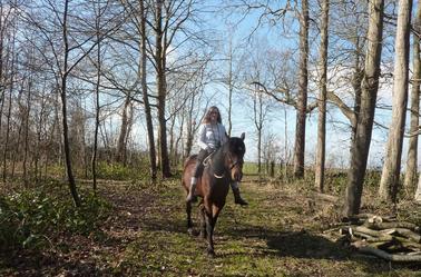 vendredi 5 Avril 2014: « De toute façon les chevaux ils ont le même problème que les gens. - Lequel ? - Ils meurent. » Danse avec Lui