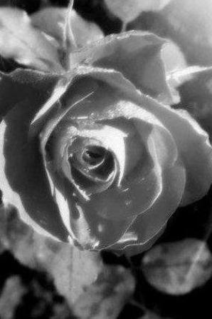 Princesse...J'arrêterai de t'aimer seulement quand un peintre sourd réussira à peindre le bruit d'un pétale de rose tombé sur un plancher de cristal d'un château qui n'a jamais existé..JIM MORRISSON