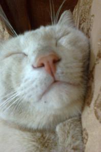 nina.mock.flach.et mon chat minouch
