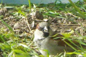 Les oiseaux autour de la maison