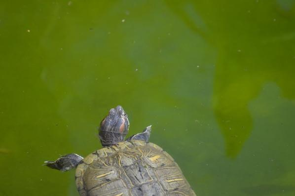 Une grande tortue