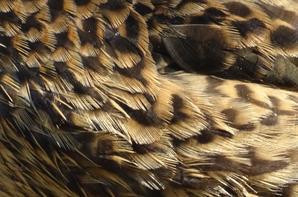 Mais ou vont ces oiseaux ? (2/3) Et ce rat !!!