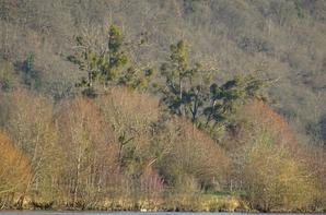 Des arbres au bord de Seine