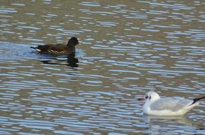Quelques oiseaux (2/2)