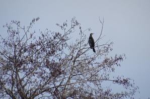 Les principaux oiseaux au bord de Seine
