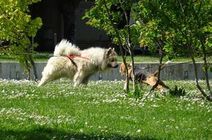 La rencontre entre deux chiens