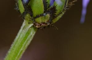 Quelques fourmis