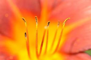 Des fleurs vues sous un nouvel angle