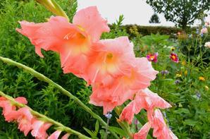 Le jardin de Giverny (5/7)