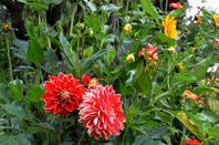 Le jardin de Giverny (1/7)