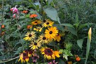 Le jardin de Giverny (6/7)