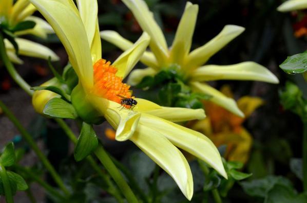 Le jardin de Giverny (7/7)