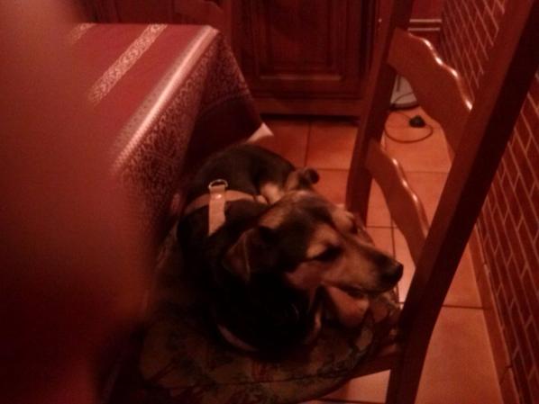 Mon chien Jack et le Lapin Angus