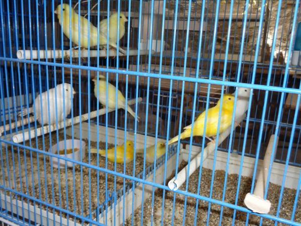 Mes jaunes et blancs (une partie )