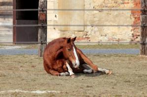 Et on ne peut pas ne pas regarder un cheval. Regardez le vraiment et jamais, jamais vous ne vous ennuierez. C'est ça le sentiment équestre. Et ce n'est rien d'autre que de l'amour, on ne monte pas parce que ça sert à quelque chose ...