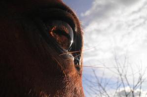 Série photo de chevaux.