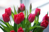 Le printemps est une belle et courte saison
