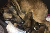 Les derniers bébés de Taz né le 02 Mai d'une saillie extérieure. Ils sont 8.