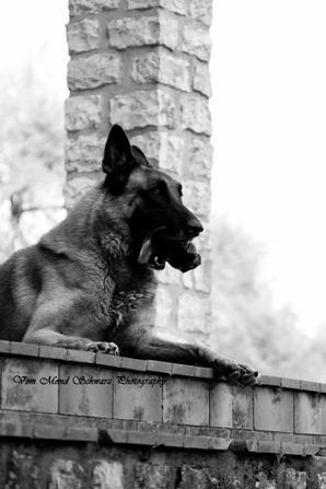 Mon gros chien (12.09.17)