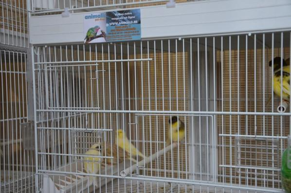 batries de cages dans la pièce des volières