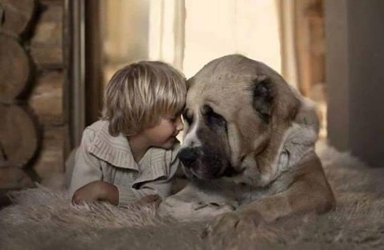 les seul etre humain qui ne te mentirons jamais te respecterons et surtout t'aimerons tel que tu ai !!