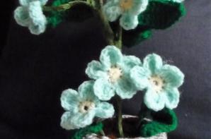Mes fleurs...