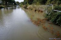 """« Mobilisons-nous pour  la préservation  du canal du Midi ! » sauvons les berges  du canal du Midi :TOUS ENSEMBLE """"merci aux bénévoles"""