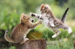CHATS TROP MIGNONS !!! ♥♥♥♥♥
