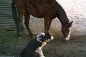 Elle est simplement parfaite, elle accepte les chiens sans probleme =) Kinder et Arizona