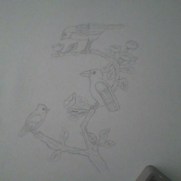 des...oiseaux!