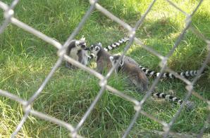 à Zoo ♥