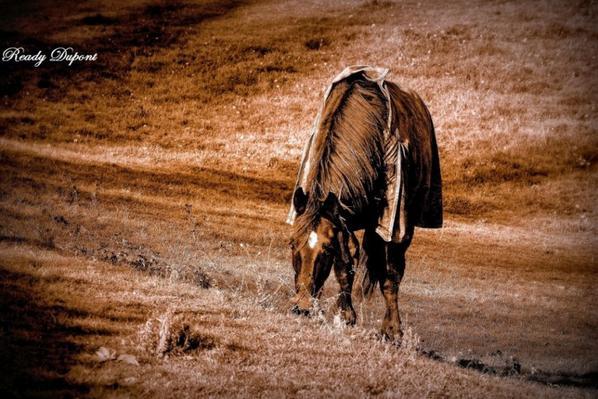 je ne suis pas le mauvais cheval comme gars...