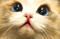 Ma passion pour les chats LE REGARD