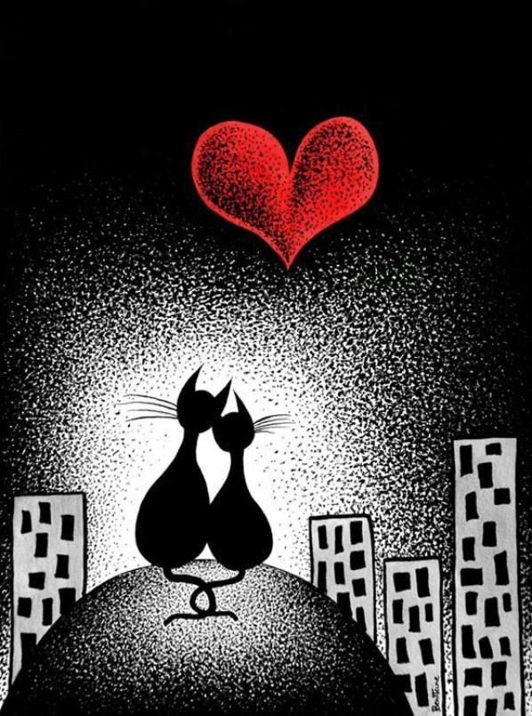 Ma passion pour les chats-L'européen noir INTRO