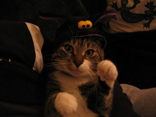 Ma Passion pour les chats - HALLOWEEN