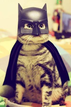 HALLOWEEN-chat BATMAN et chat HELLO KITTY