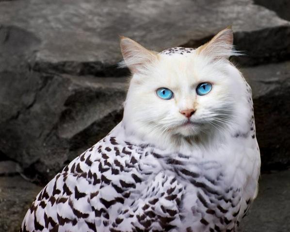 Ma Passion pour les Chats - Le Meowl