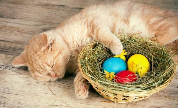 Ma Passion pour les Chats - Le Pâques des chats