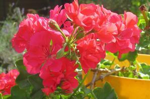Quelques fleurs.........