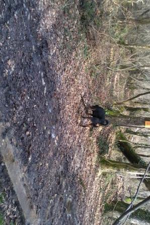promene dans les bois