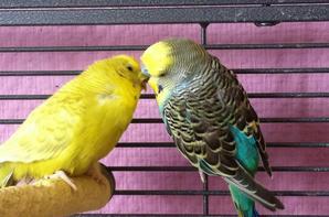 Il y a de l'amour dans l'air ,enfin !!