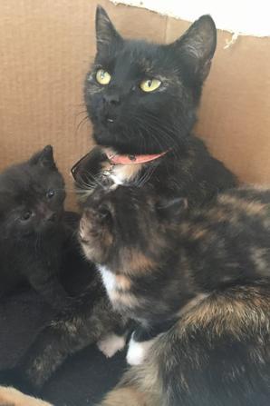 Kattsommar