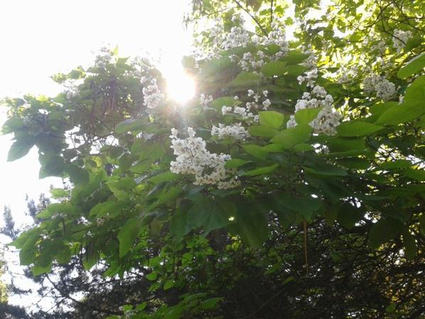 Balade dans le parc (comme mon grand jardin) et vu sur la nature!