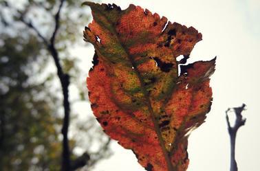 « A l'automne des saisons, ce sont les feuilles qui meurent. A l'automne de la vie, ce sont nos souvenirs. »